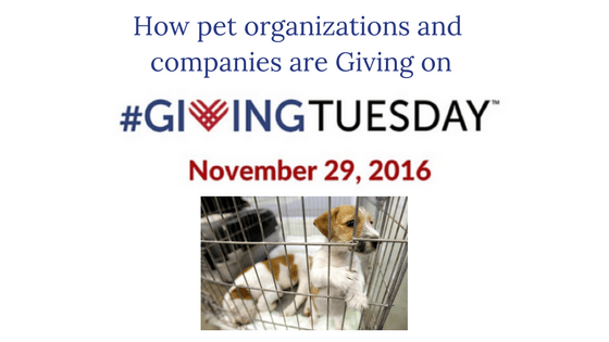 How to help Pets on #GivingTuesday